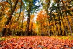 Banan i skogen i hösten Många vibrerande färger, beaut royaltyfria foton