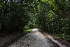 Banan i Tikal parkerar Sightobjekt i Guatemala med Mayan tempel och ceremoniel fördärvar arkivfoto