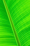 Banan leaf Royalty Free Stock Images