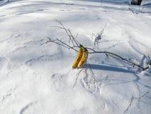 Banan na śnieżnym lodowaceniu Fotografia Stock