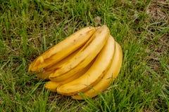 Banan na tła drewnie Obraz Royalty Free