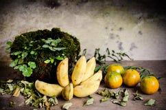 Banan och apelsiner och keramisk krusräkning med mossa Royaltyfri Fotografi