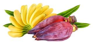 Banan och isolerad bananblomning arkivfoto