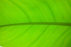 Banan opuszcza makro- obraz stock