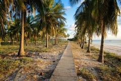Banan till och med kokosnöten gömma i handflatan på den tropiska stranden Arkivfoto