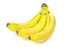 banan tre Royaltyfria Bilder
