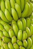 banan zieleń Fotografia Royalty Free