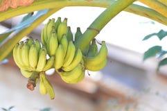 banana Fotos de Stock
