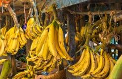 Free Banana Royalty Free Stock Photography - 13583957