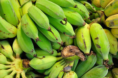 Banana. One type of popular fruit in Thailand stock photography