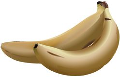 Banana. High detailed vector illustration Stock Photography