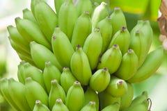 Free Banana Stock Image - 24345691