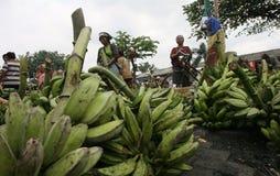 Banana Fotografia Stock