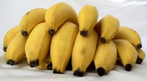 Banana. Fruit series in studio royalty free stock image