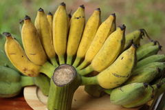 Banana Immagine Stock Libera da Diritti