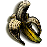 A banana aberta em um fundo vazio com sombra ilustração stock