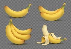 A banana amarela realística, bananas ajunta a ilustração do vetor 3d no fundo transparente ilustração do vetor