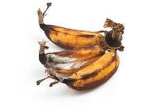 Banana ammuffita su bianco Fotografie Stock