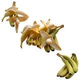 Banana Appetizing Tropical. Stock Photos