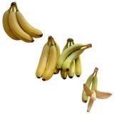 Banana Appetizing Tropical. Royalty Free Stock Photos