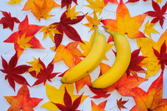 Banana with autumn leaves Stock Photos