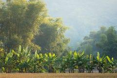 Banana and bamboo trees Royalty Free Stock Photo