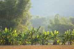 Banana and bamboo trees Royalty Free Stock Photography