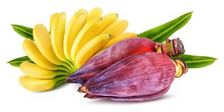Banana and banana blossom isolated. On white background stock image