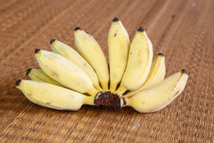 Banana, banana coltivata. Fotografia Stock