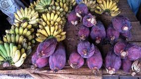 Banana blossom. Banana and banana blossom Stock Images