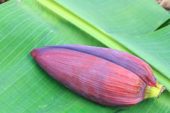 Banana blossom on on green banana leaf Stock Photos