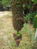 Banana blossom and green fruits Royalty Free Stock Photography