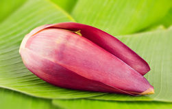 Banana blossom on leaves Stock Photo