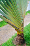Banana blow. Balcony of home and garden Royalty Free Stock Photography