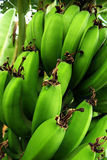 Banana bunch Royalty Free Stock Image