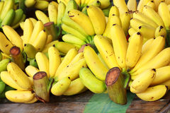 Banana bunch Stock Photography