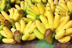 Banana bunch Stock Photography