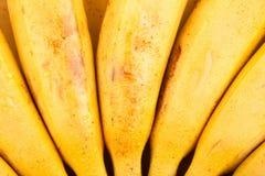 Banana bunch background Royalty Free Stock Image