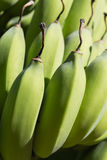 Banana bunch close-up. Part of green-yellow banana bunch, close-up shot Stock Photography