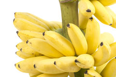 Banana bunch cluster Stock Photography