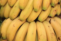 Banana Bunch on Farmers Market Stock Image