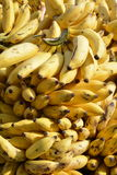Banana bunch. A picture of banana`s bunch sold at a market stall Stock Photo