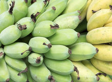 Banana bunch with the raw and rip banaan. Royalty Free Stock Images