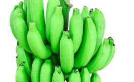 Banana bunch on tree  Stock Image