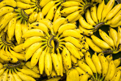 Banana bunches Royalty Free Stock Images