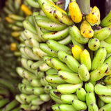 Banana Bunches, Latin America street market Royalty Free Stock Photos