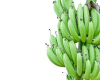 Banana Bundle Green Royalty Free Stock Photography