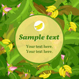 Banana card with round space for text Stock Images