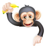 Banana Chimp Monkey Pointing Stock Photos