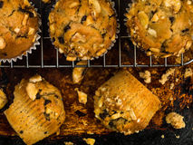 Banana and Chocolate Chip Muffins Royalty Free Stock Image